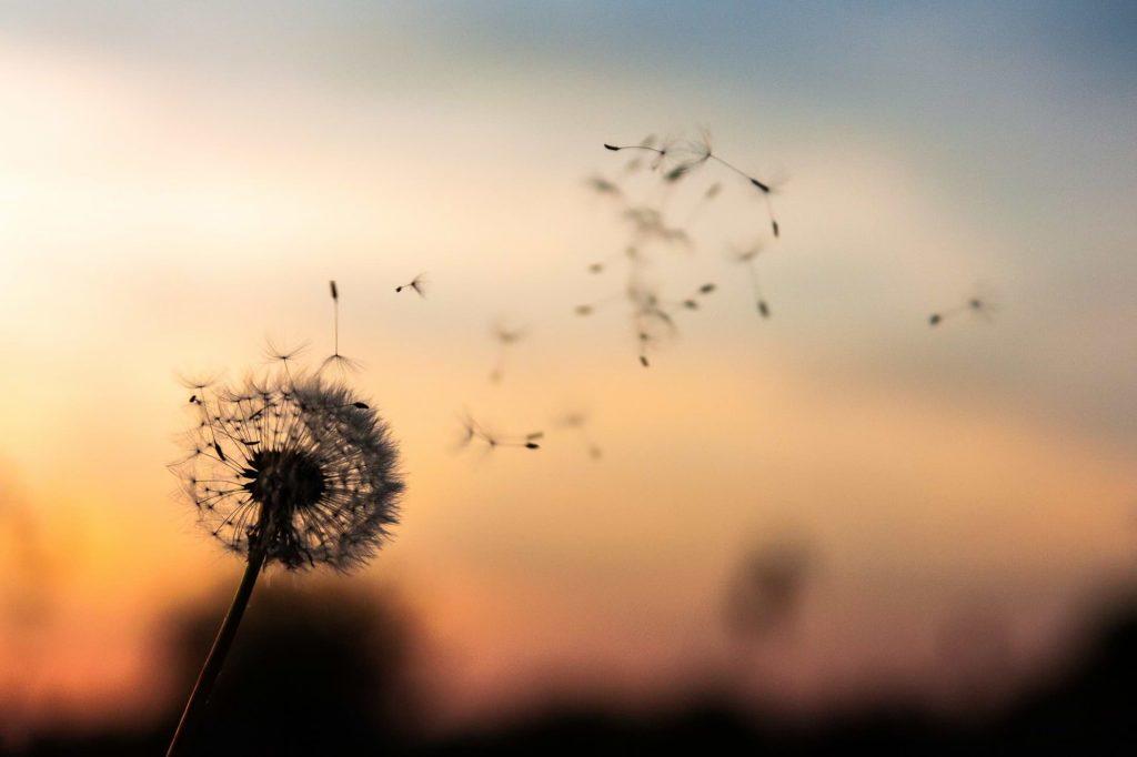 פרח ושקיעה